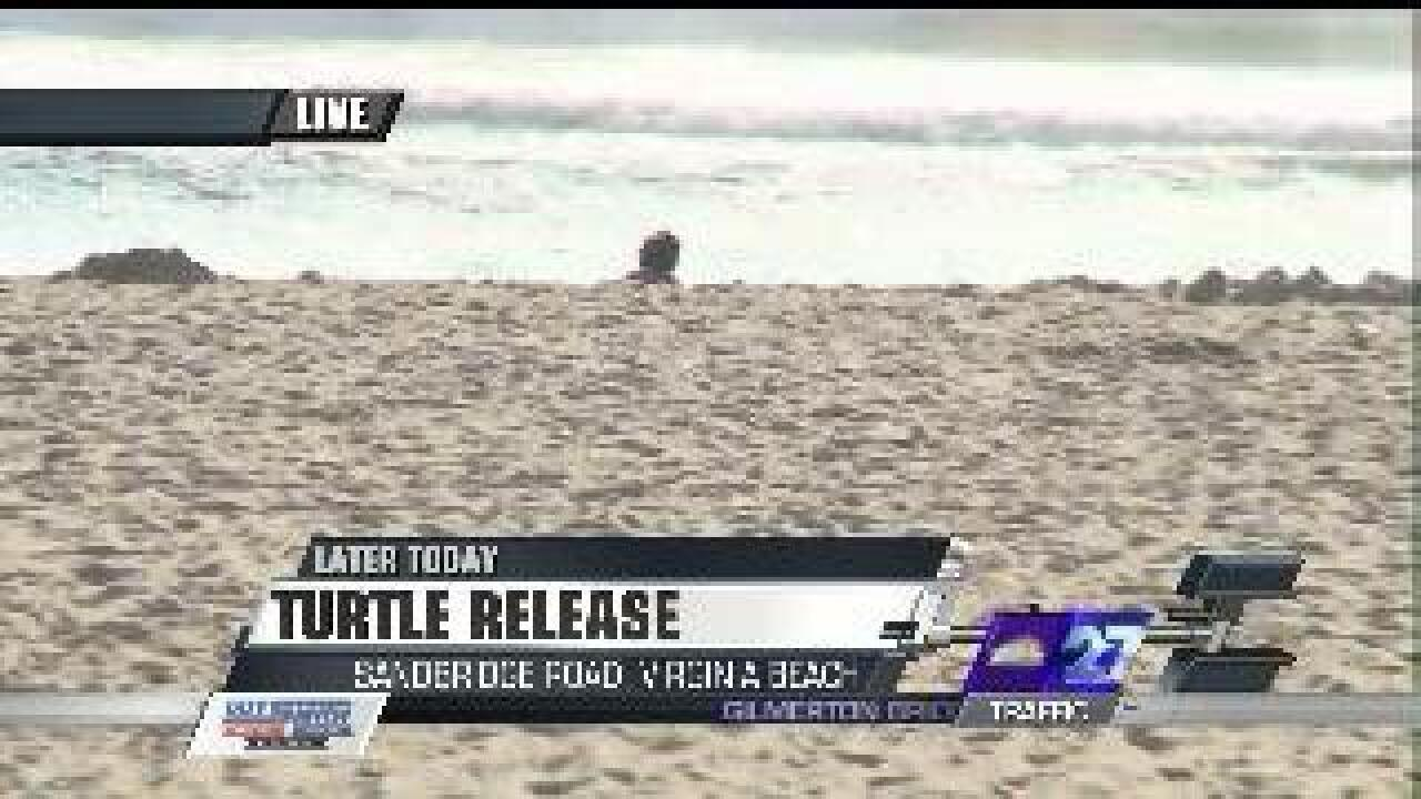 'PacMan' the turtle to be released in Sandbridge