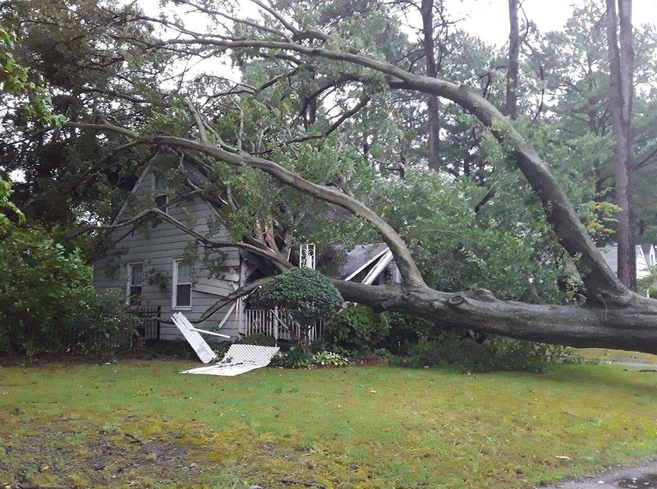 Tree in house Burleigh ave.jpg