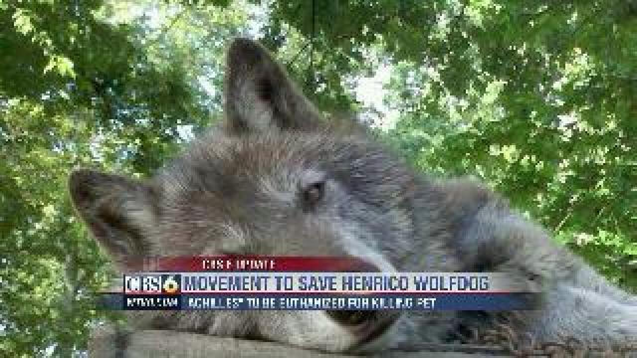 Sanctuary wants to save Henrico wolfdog from being euthanized