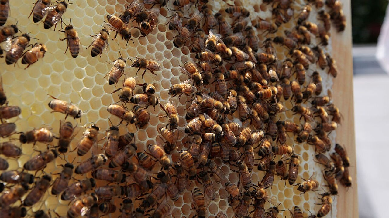 Arizona man registers beehive as emotional support animal