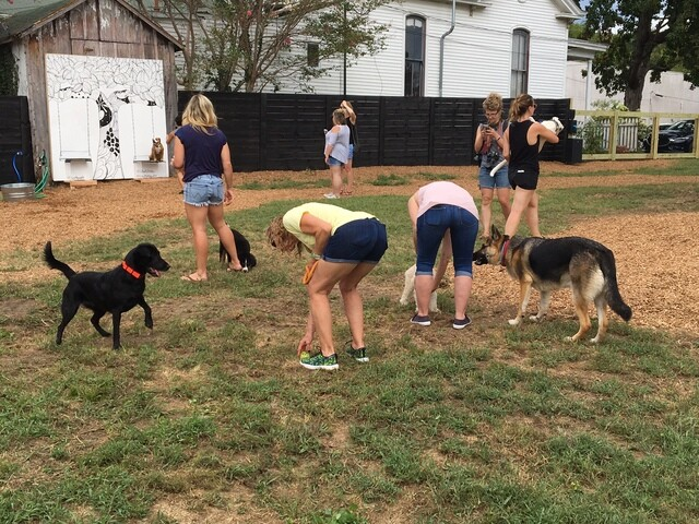Photos: Pop-Up BarkPark Open In East Nashville