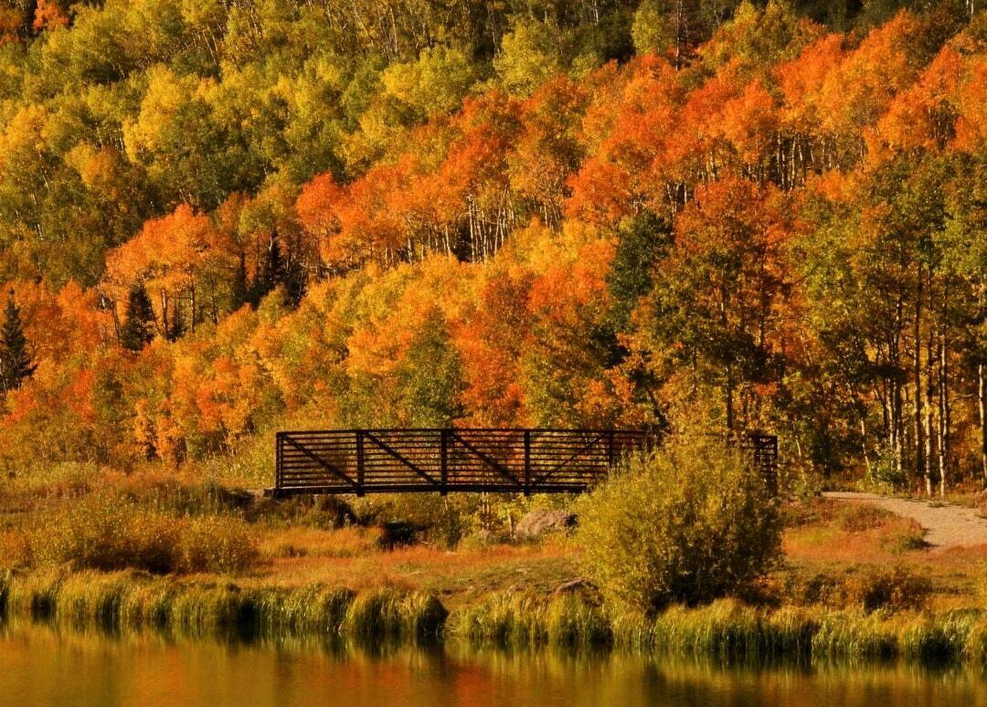 Grand Mesa changing leaves_Melania Rontino