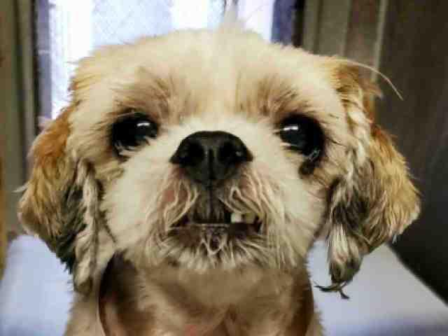 Adoptable pets from Arizona Humane Society and Maricopa County Animal Care (8/29)