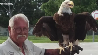 Birds of prey providing therapy for veterans with PTSD