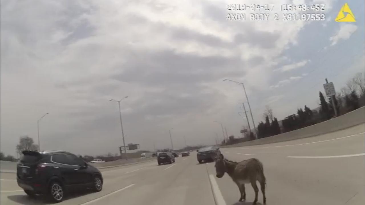 KNXV Donkey on I-90