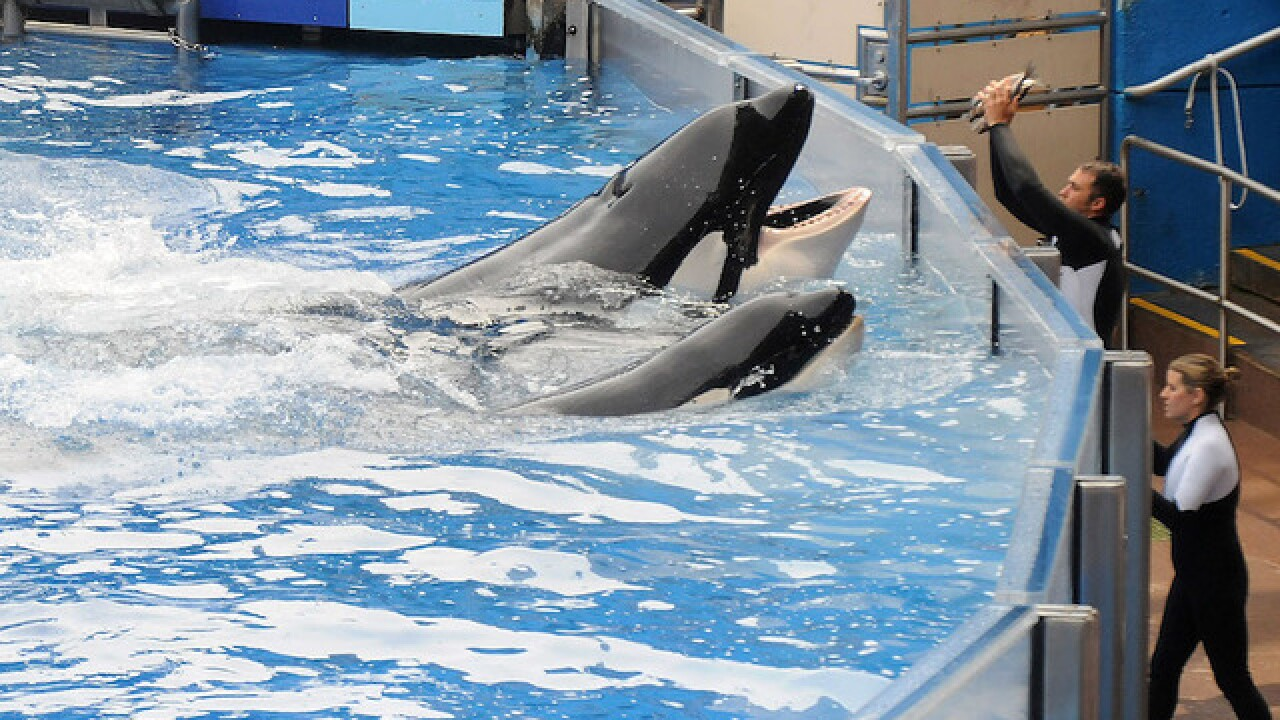 SeaWorld makes a big splash: Attendance up, stock soars