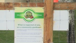 Helena Community Gardens see increased interest for 2020 season