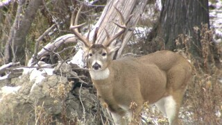 Youth deer hunt underway in Montana