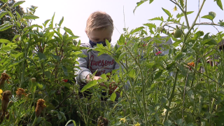Community garden at Akron elementary school teaching kids about healthy eating