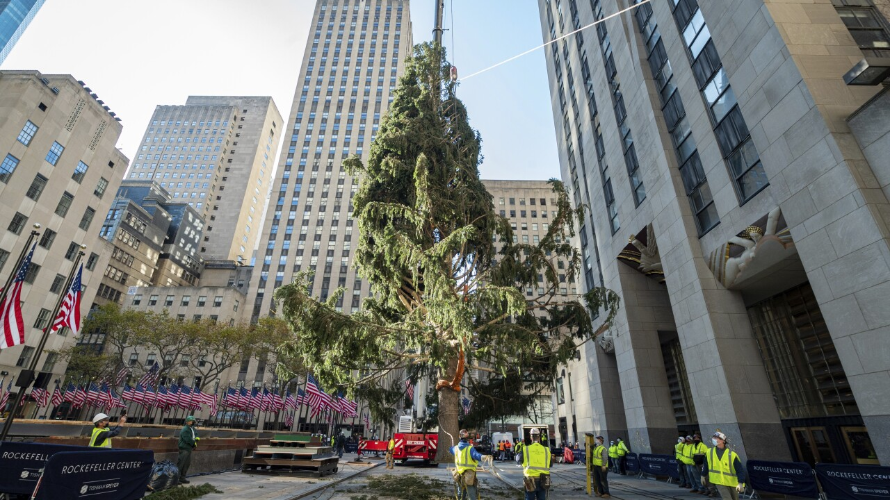 Owl rescued in Rockefeller Center Christmas tree released into the wild