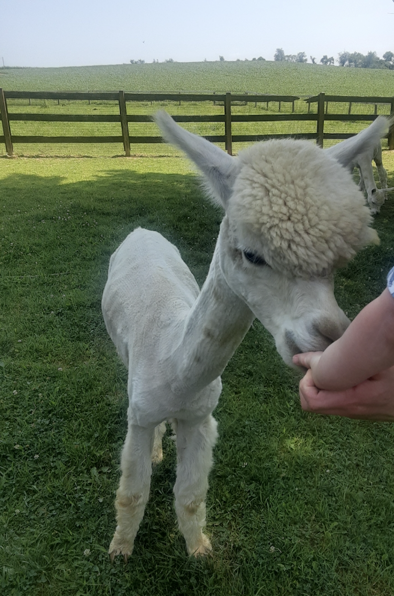 Baugher's Orchard/Petting Farm