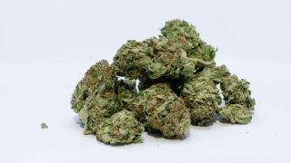 marijuana-pot-weed-leaves-generic3.png