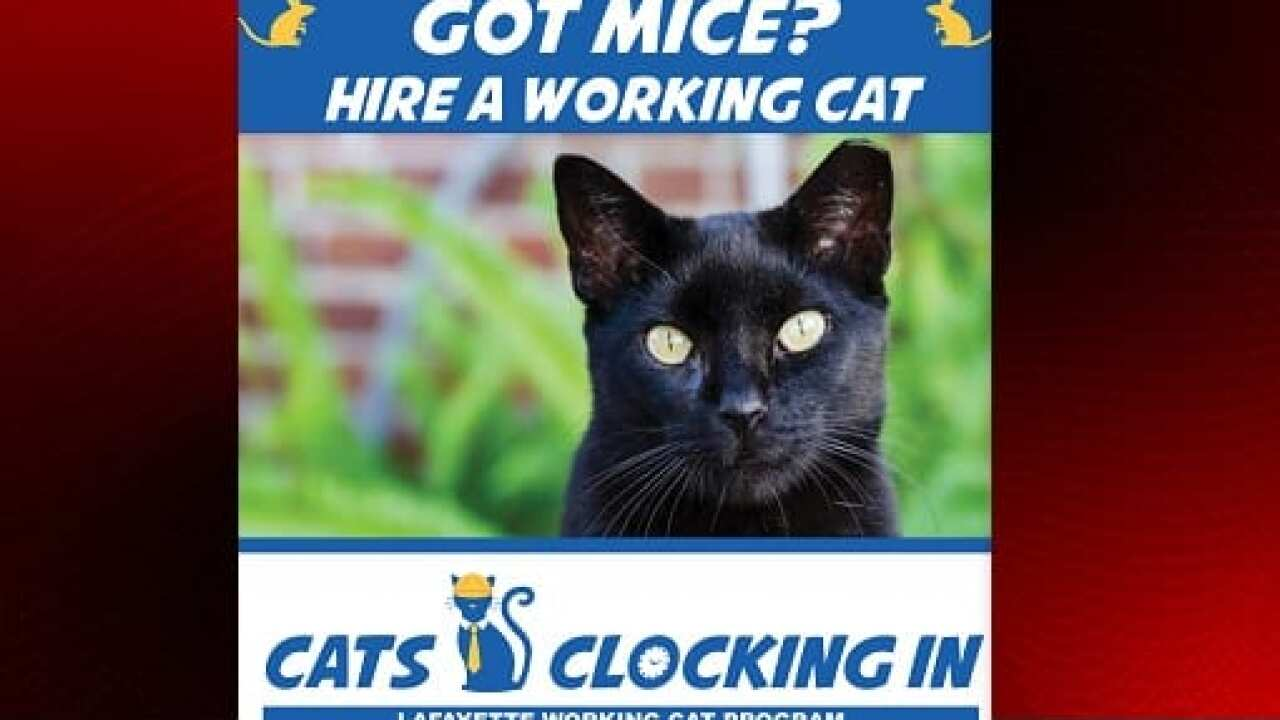 Working Cats Clock In for a second chance