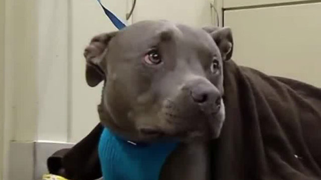 Dog survives bear attack in Broward County
