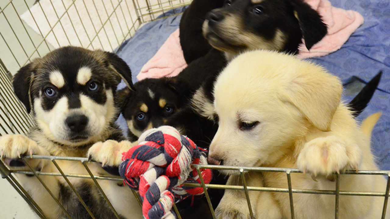 Shelters waiving adoption fees this weekend