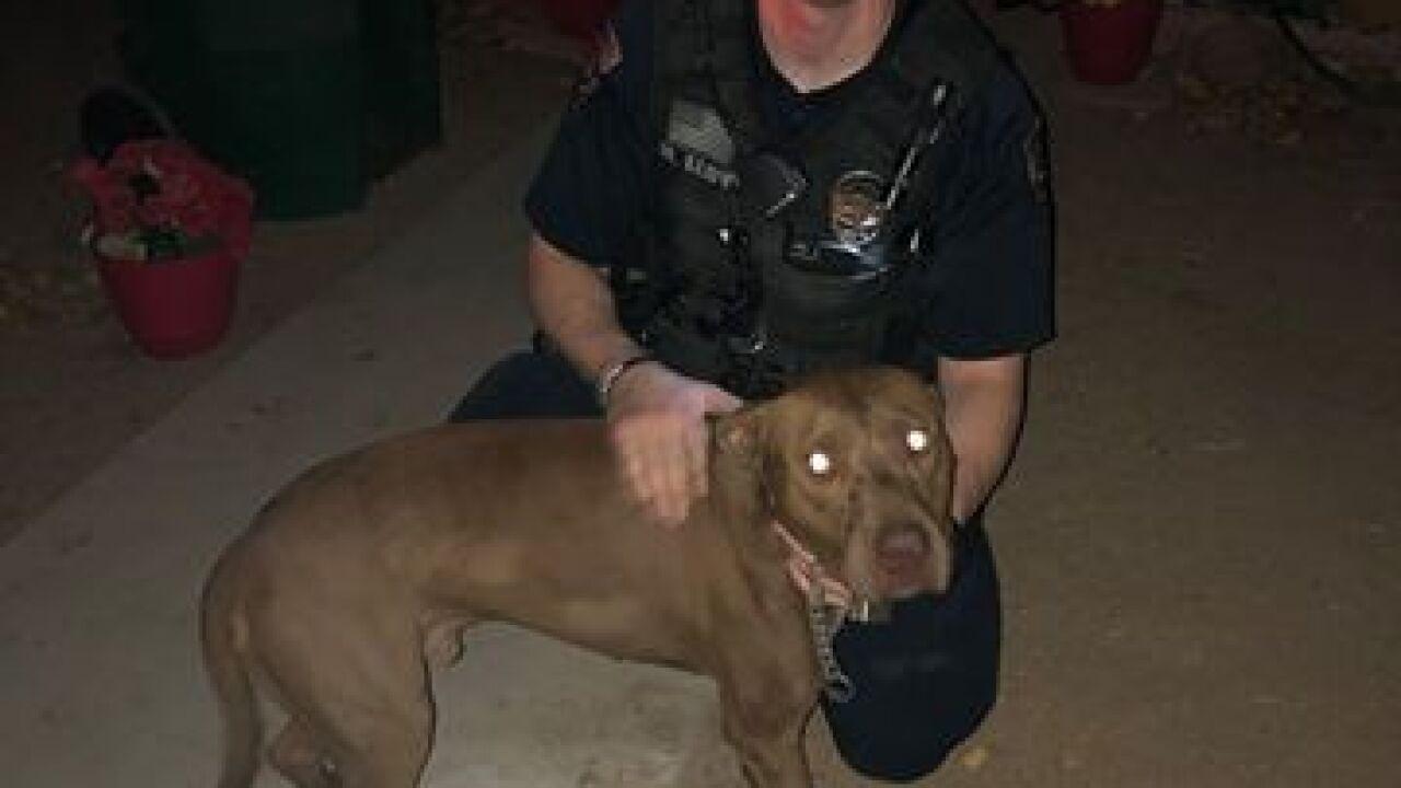 Good Samaritan helps save dog from burning home