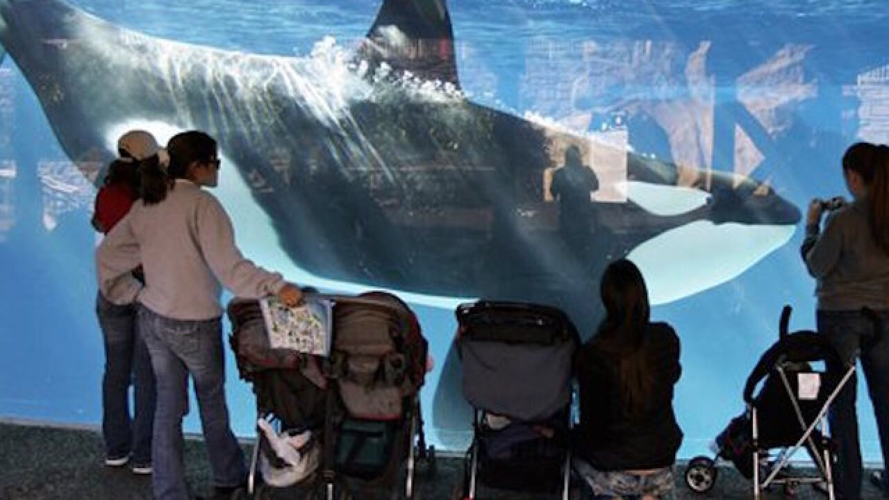 SeaWorld suing Calif. over ban on orca breeding