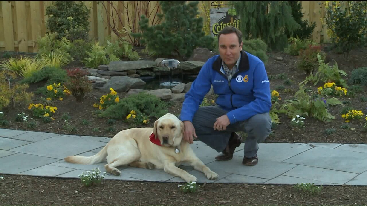 Walter the Weather Dog nabs 3rd place in calendar contest