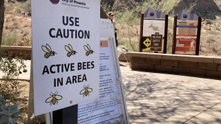 Echo Canyon bees