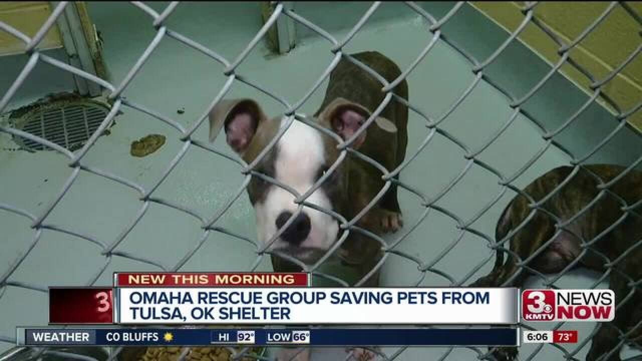 Dogs and cats from Oklahoma coming to Omaha