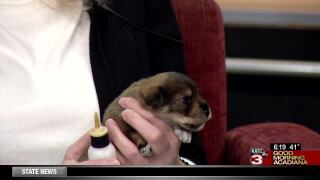 Pet Paws: Supporting Animal Aid in infant animal care
