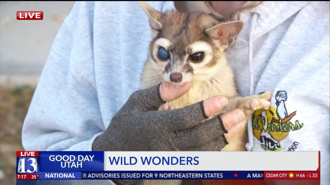 Educational animal encounters at WildWonders