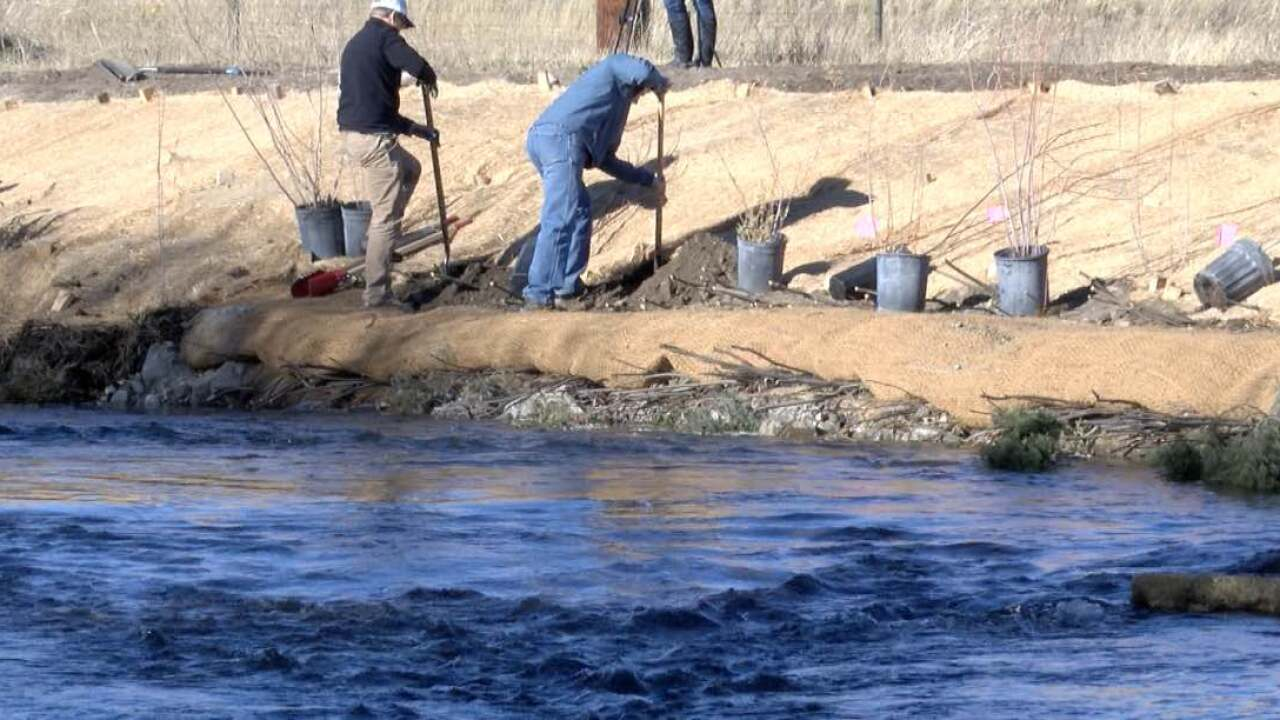 Healthy waters: Tributary restoration to help future trout populations in Upper Clark Fork