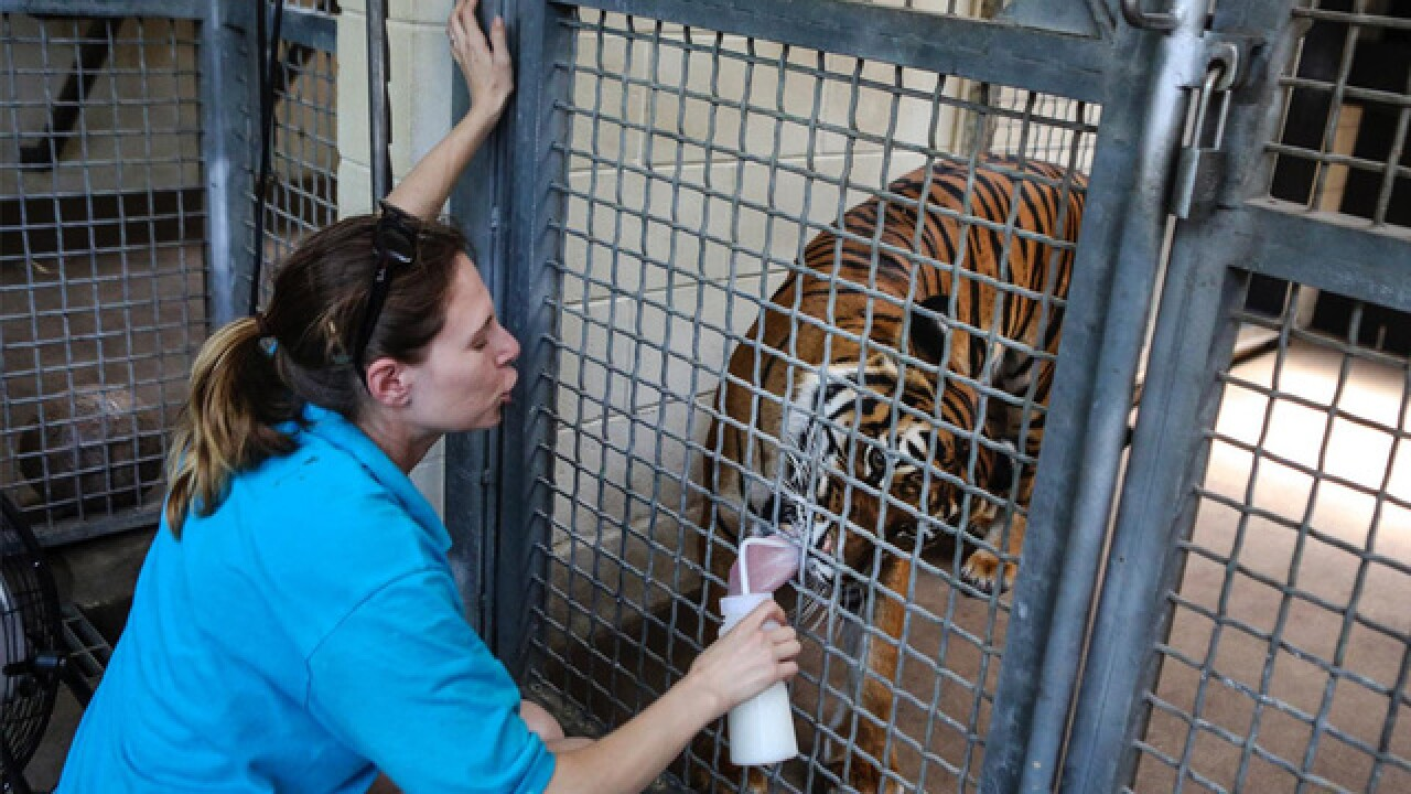 Person hurt inside tiger area at Palm Beach Zoo