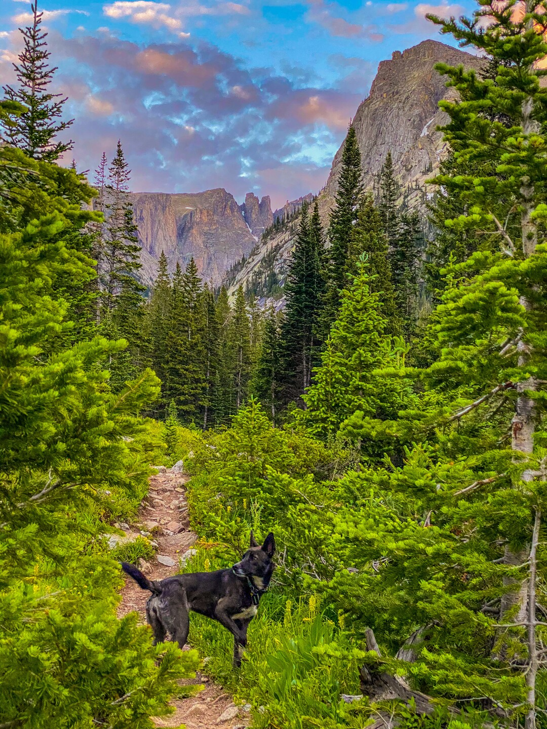 Jonathan Mather's dog_barefoot 14ers