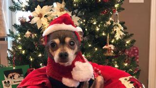 Pedro as Santa.jpg