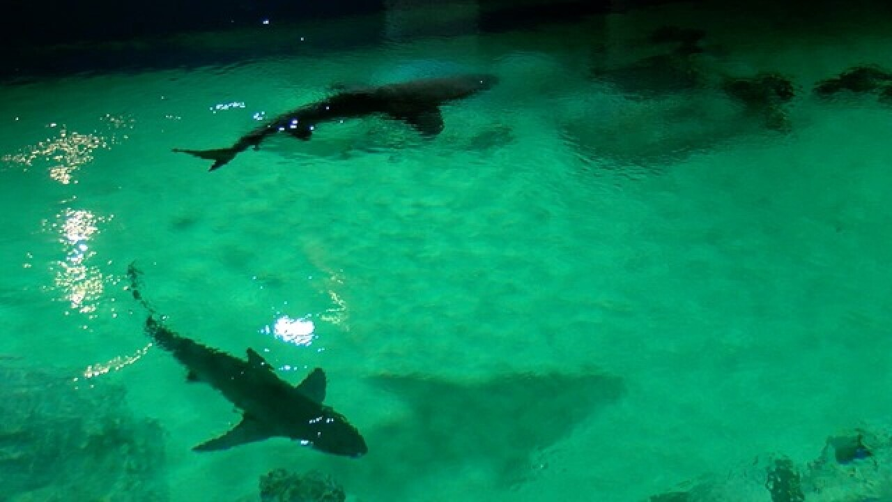 10 things to see and do at Odysea Aquarium