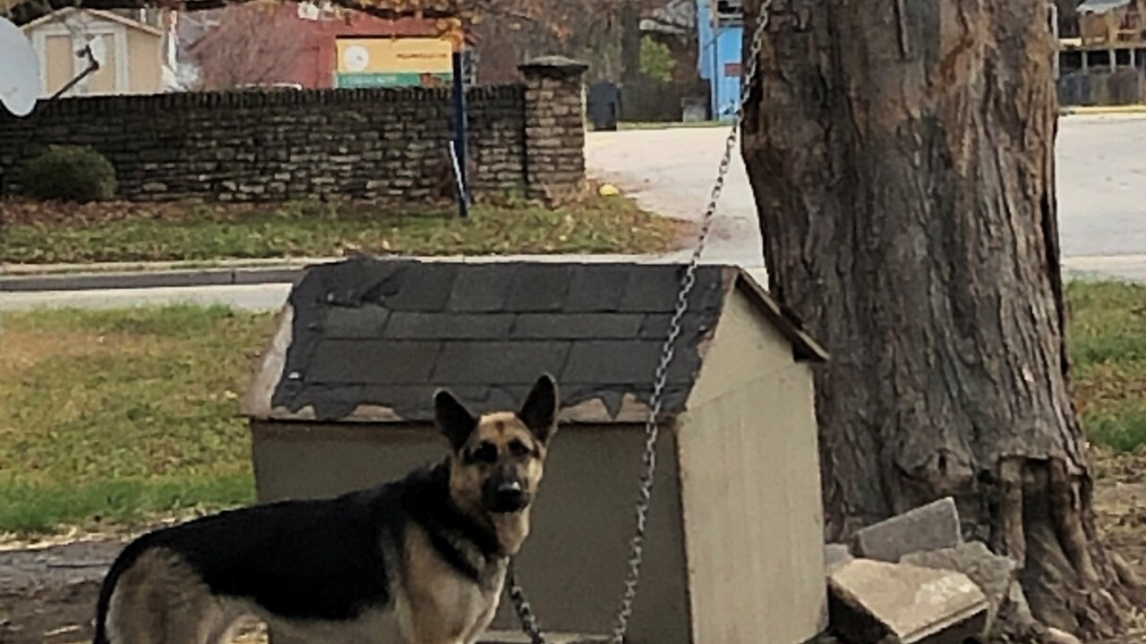 Dog chained up on the east side