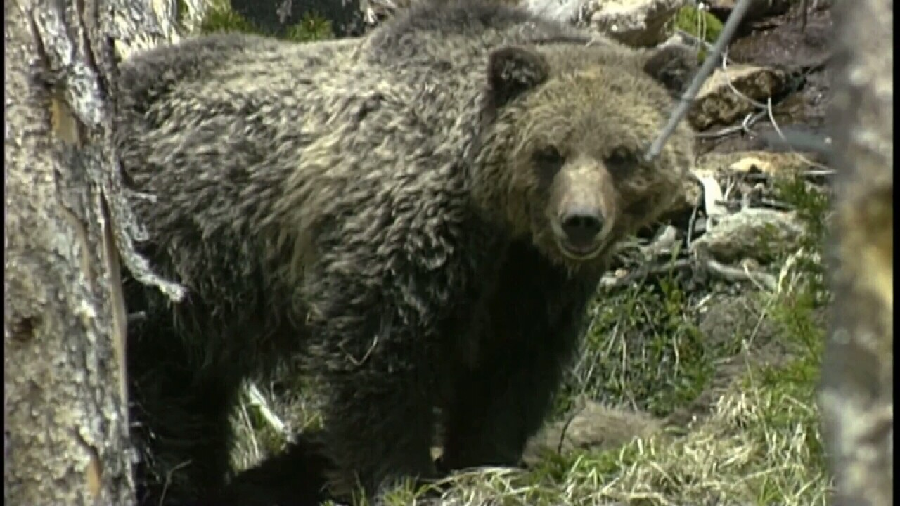 This Week in Fish and Wildlife: Bear safety in the fall