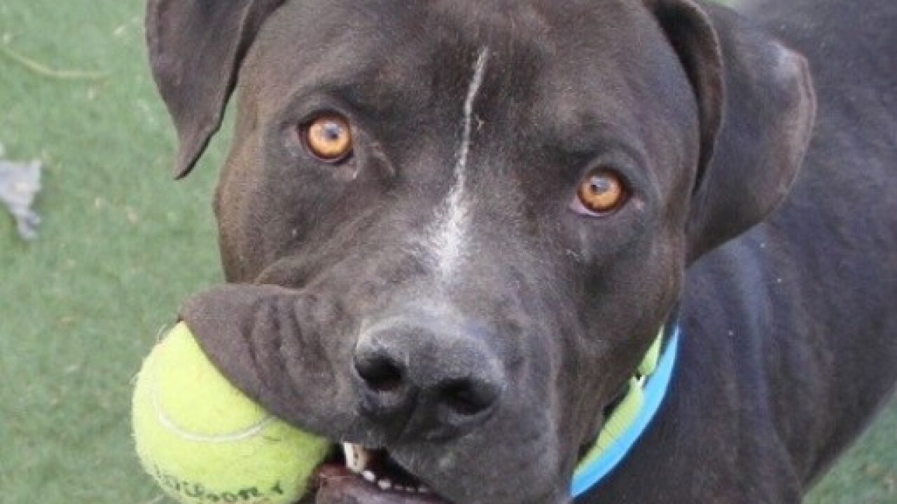 The Animal Foundation discounting select pets