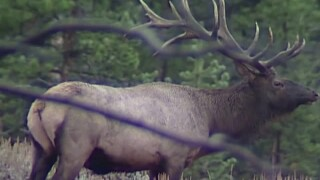 This Week in Fish and Wildlife: Forecast for upcoming hunting season