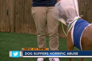 Suncoast Animal League rescues dog after someone poured boiling water on him