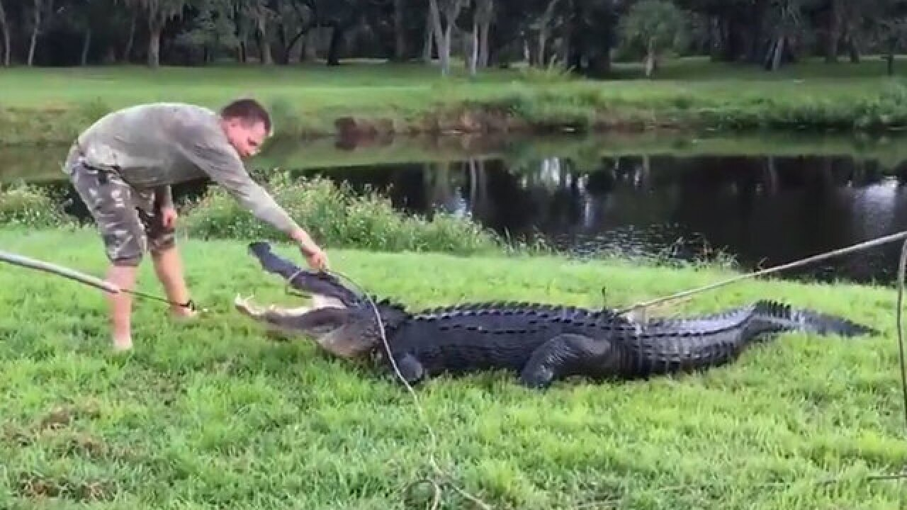 Man bitten by 11-foot alligator in Florida