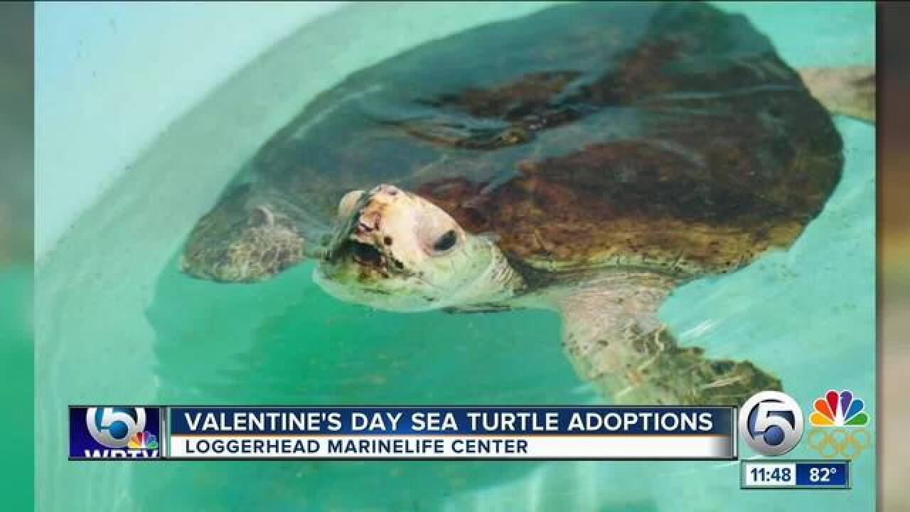 Valentine's Day sea turtle adoptions at Loggerhead Marinelife Center