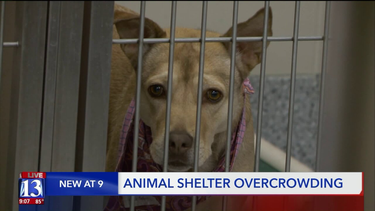 Davis County shelter completely full after seeing spike in animals