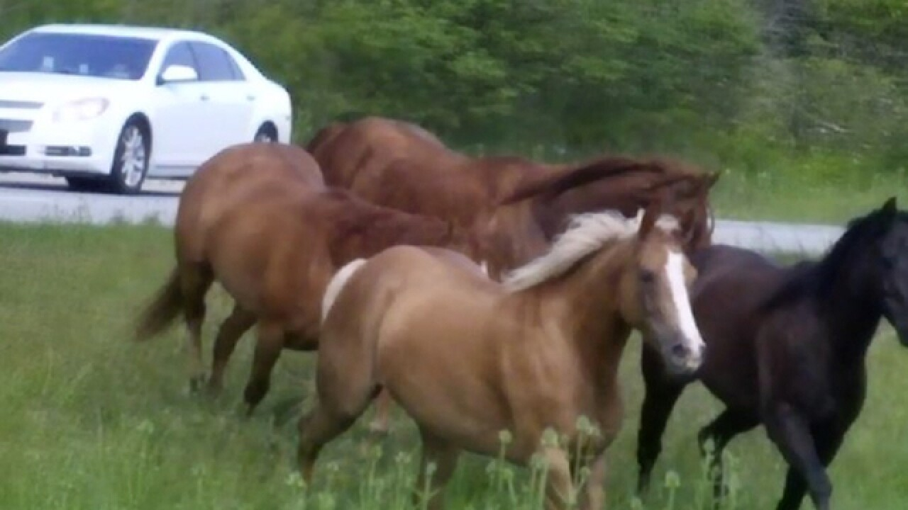 Wild horses shut down traffic on I-74