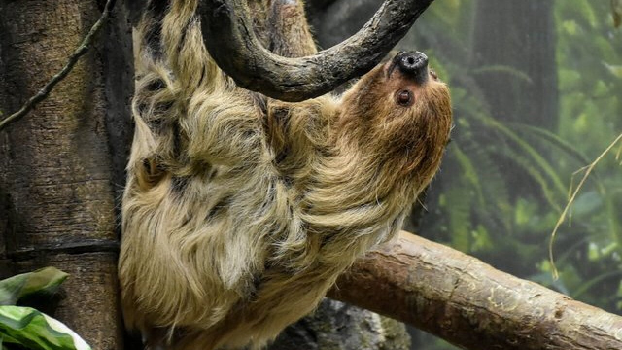 Beloved Buffalo Zoo resident dies