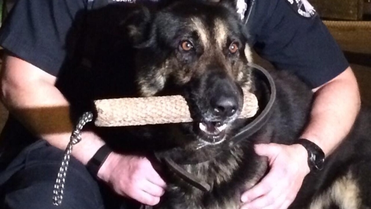Hit-and-run strikes Covington police K9 cruiser