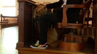 court dogs2.jpg