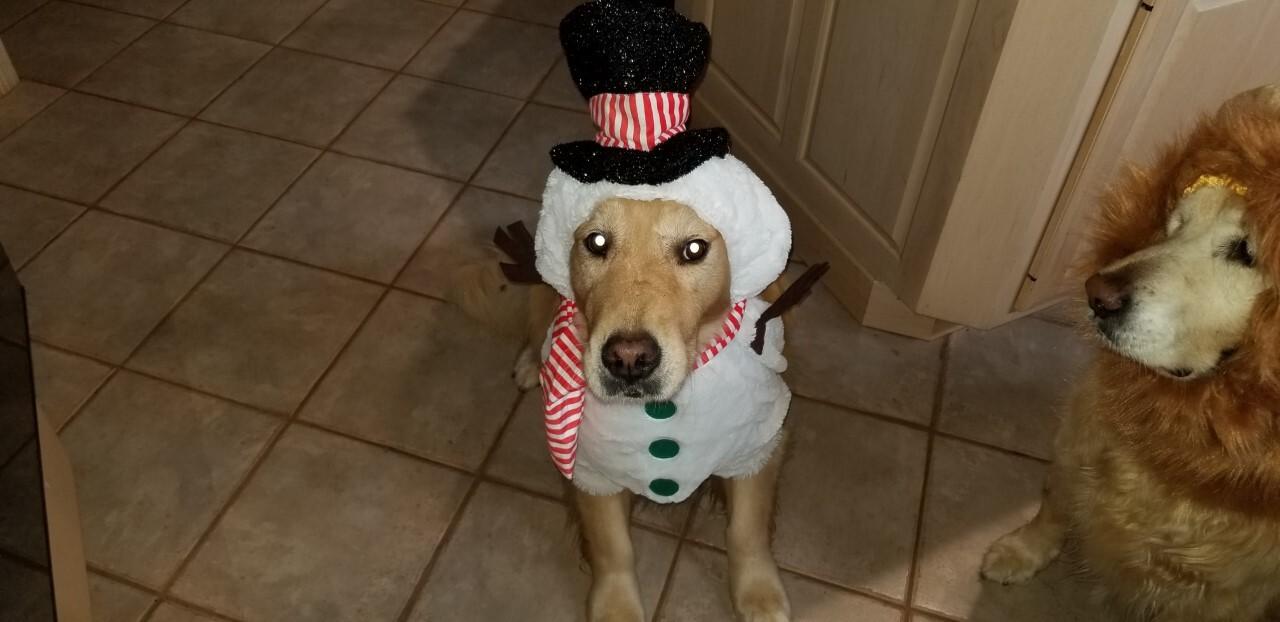 Pet Costume17.jpg