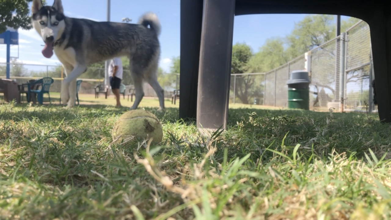 Personal belongings to be stripped from Pima County dog parks