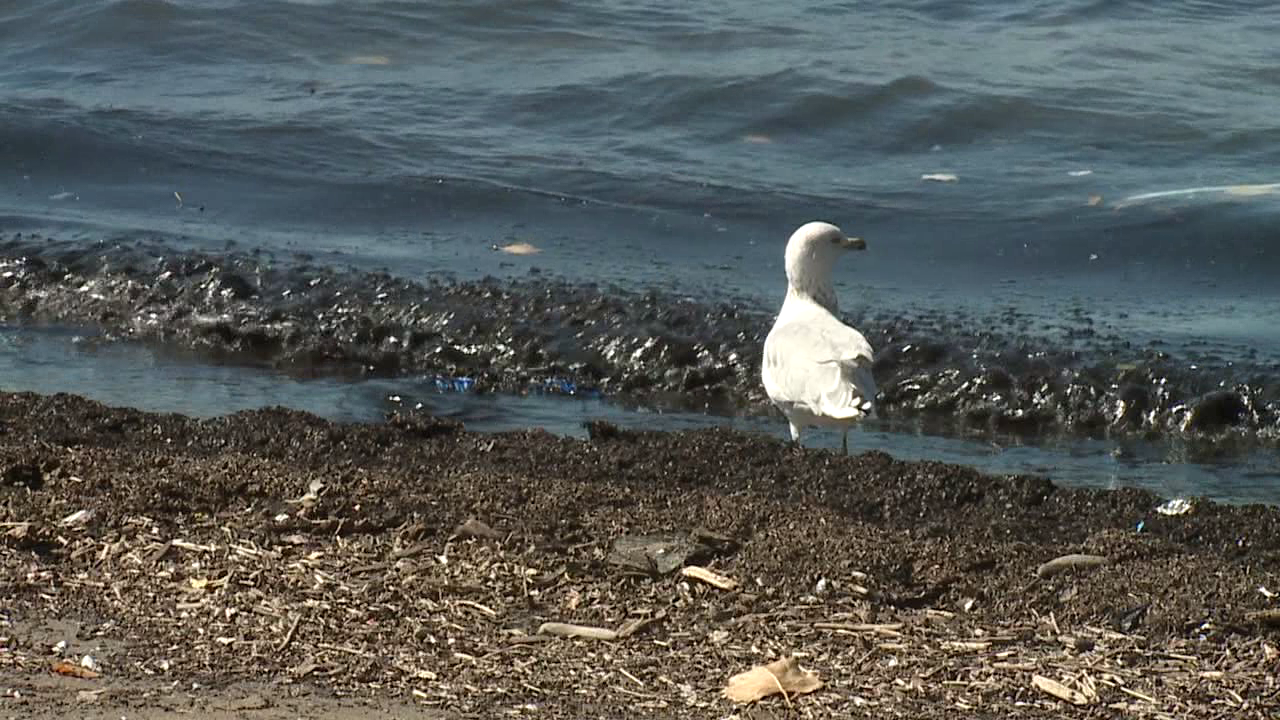 Plastic pollution harms wildlife that can mistake plastic for food