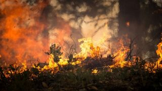 Apalachicola National Forest prescribed burning today in Liberty County