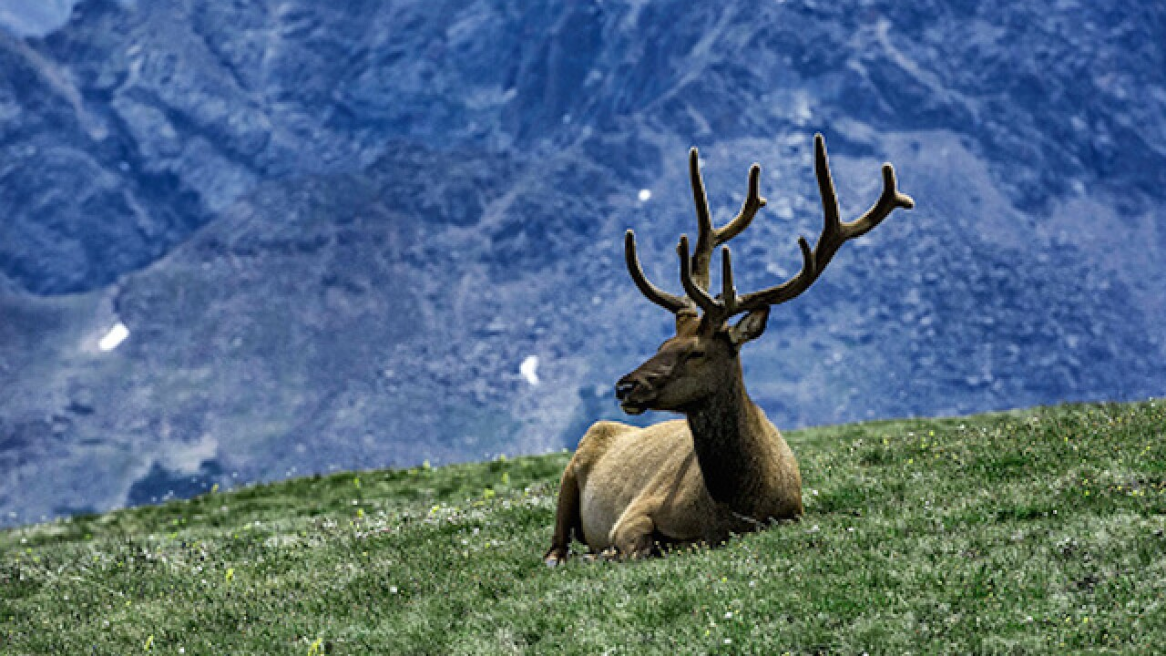 Alaska restaurant serving elk fined for calling it reindeer