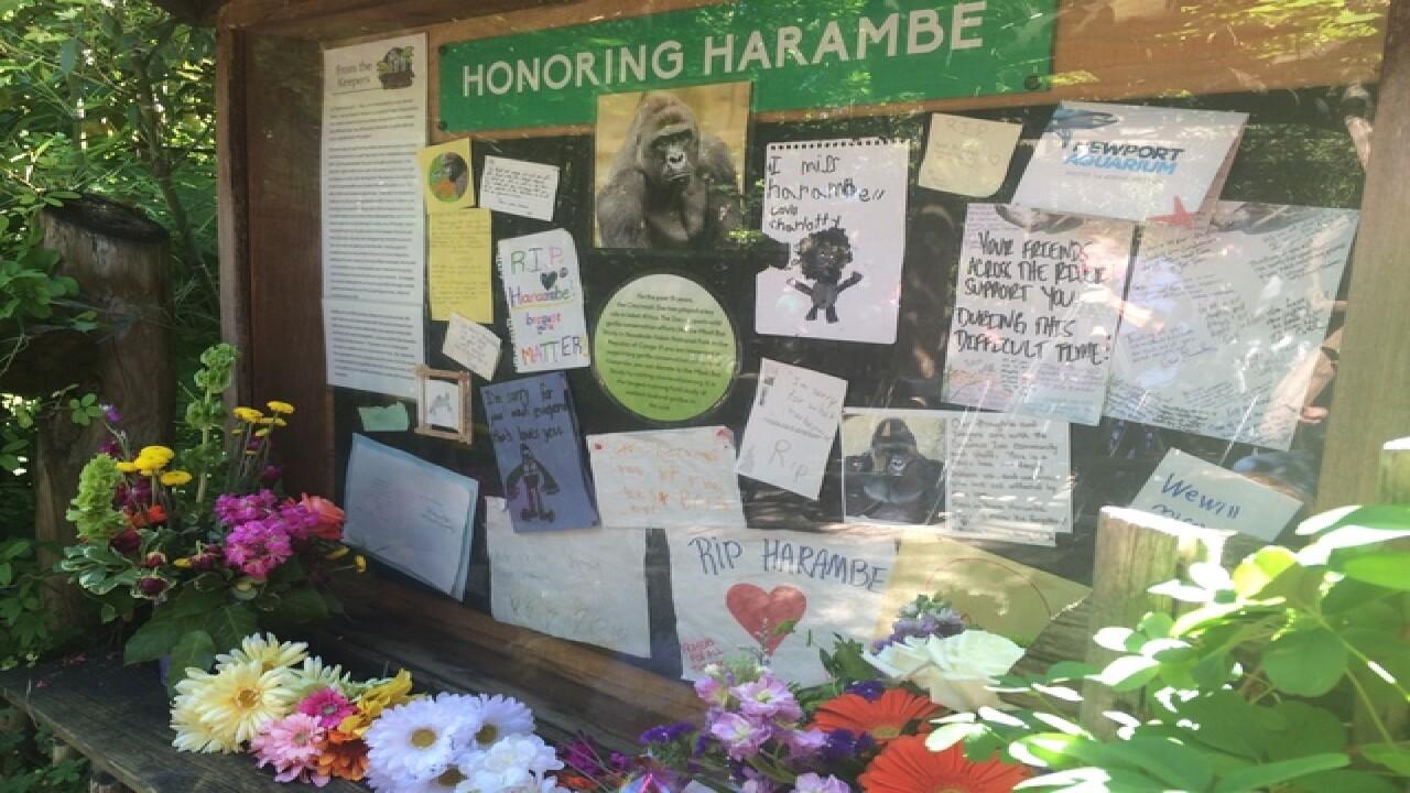 LIVE: Cincinnati Zoo reopens gorilla exhibit