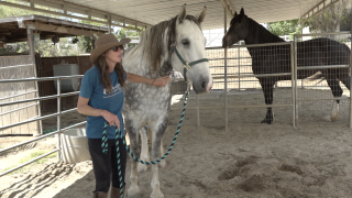 Horse rescue owner speaks out after Blossom Valley ranch tragedy